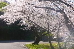 photo_spring